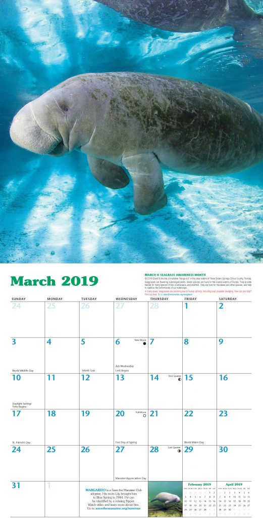 Each month features a manatee photo, facts, and an adoptee - image courtesy SMC